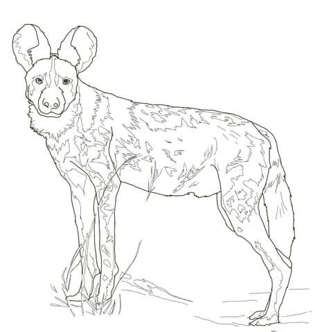 coloring pages of coon dogs sketches of dogs coloring coloring pages