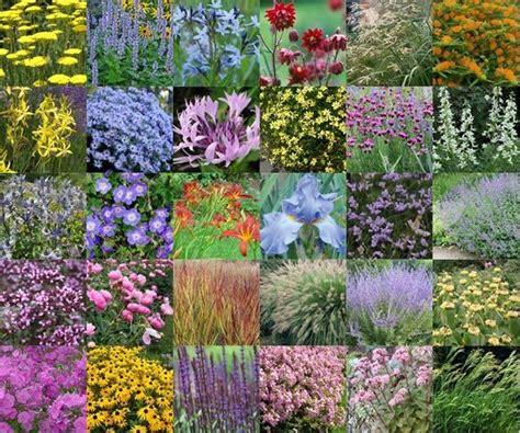 bloem pot hoog been 25 beste idee 235 n over vaste planten op pinterest het