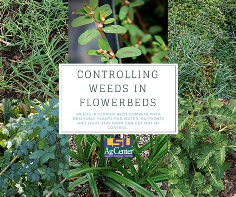 kill weeds in flower bed kill weeds in flower bed bedding sets