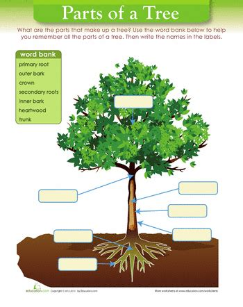 parts of a tree diagram tree diagram diagram worksheets and kindergarten science