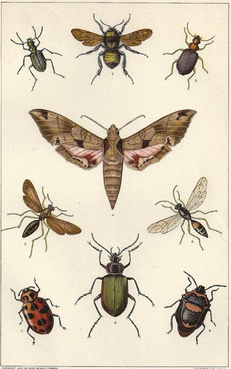 printable insect poster antique insects print moth bumblebee beetle fly wasp bugs