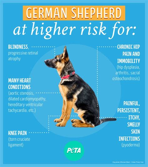 7 Health Conditions That Hit Dogs by 28 Best Breed Information Images On