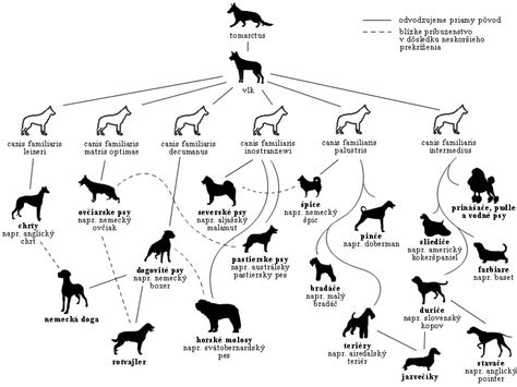 the evolution of dogs evolution of breeds welshterrier