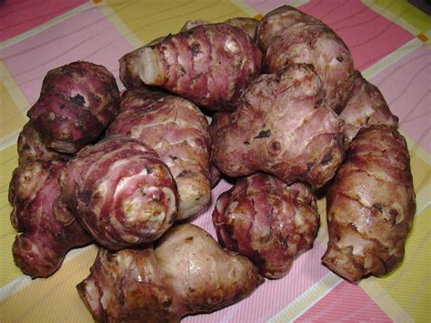 cucinare i topinambur pur 232 di topinambur e patate ricetta
