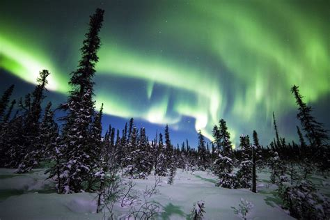 snowy alaskan cluster light tree denali national parkalaska wallpapers 49 wallpapers hd wallpapers