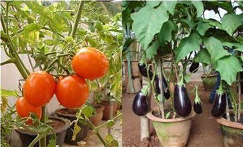 Kitchen Garden Seeds Bangalore How To Grow Your Own Organic Kitchen Garden Sulekha