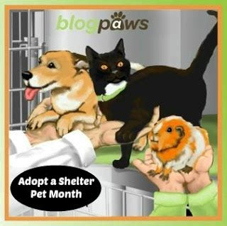 8 Reasons To Adopt A Pet Rather Than Buy by Barking From The Bayou