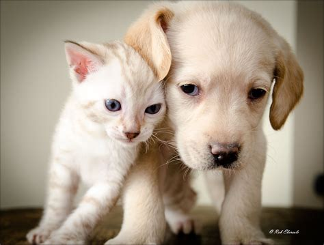 puppies kittens kittens and puppies are cutest pair in the world the cutest kitties