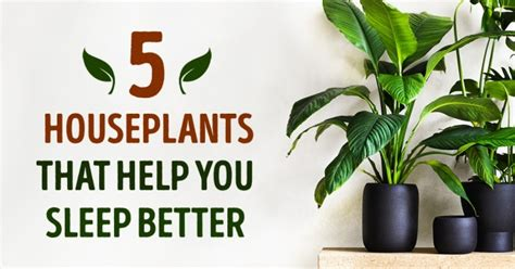Bedroom Plants To Help Sleep The Five Best Houseplants That Help You Sleep Better
