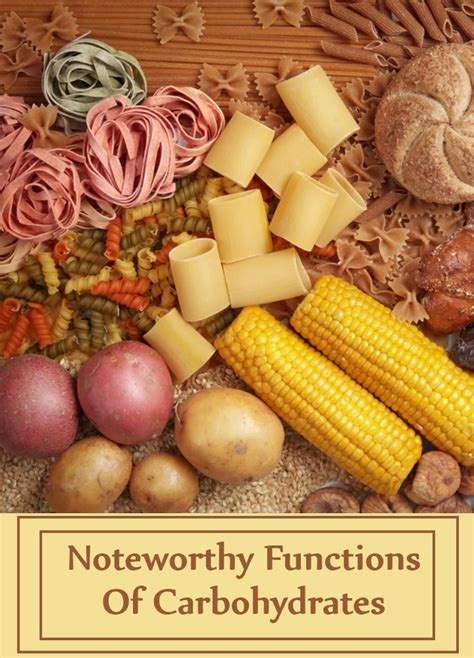 carbohydrates supplement 7 noteworthy functions of carbohydrates home