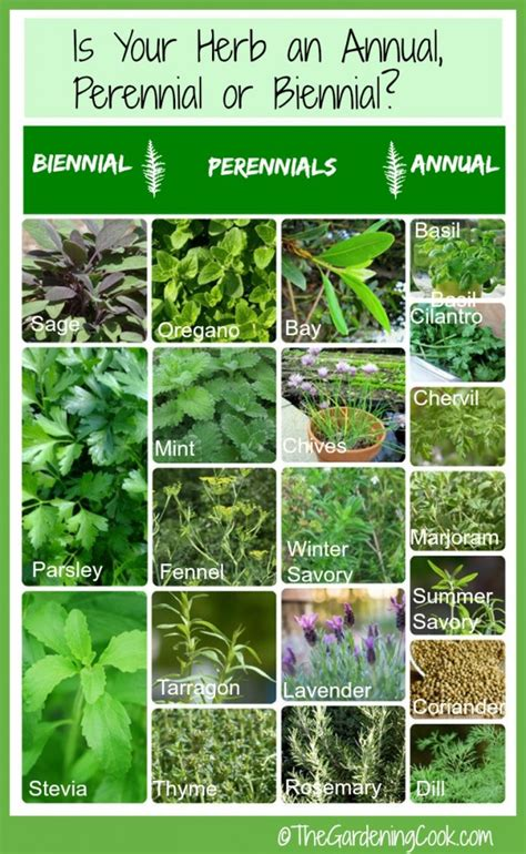 herb grower s sheet fresh herbs annual biennial or perennial the gardening cook