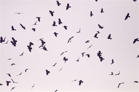 flock birds korea blog