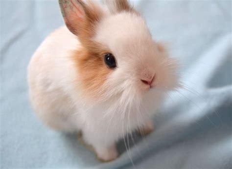 Dress Rabbit Kelinci animals beautiful bunnies rabbit image 333706 on favim