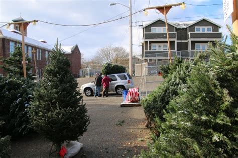 best seattle tree lot west seattle west seattle holy rosary tree lot s 1st weekend
