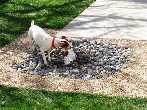 backyard ideas  delight  dog philly