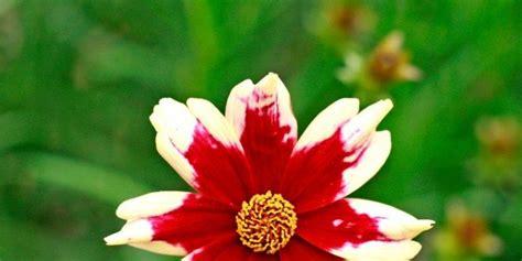 fiori autunnali da giardino fiori colorati da giardino autunnale cose di casa