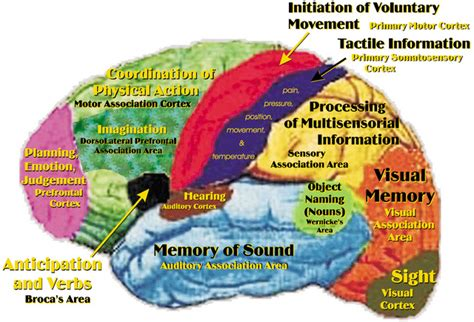 human brain mapping brain map project set to revolutionise neuroscience quot no doubt about it that nut s a genius quot