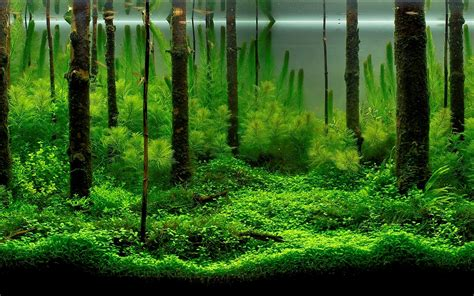 forest aquascape background of fish tank wallpaper joy studio design