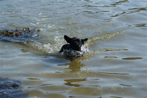 zwemvest bulldog diva franse bulldog op vakantie bokt nl