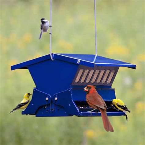 best squirrel proof resistant bird feeders