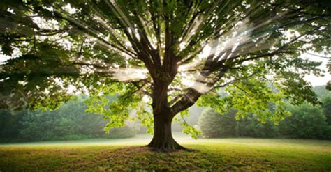 top 10 pictures of trees for day join the arbor day foundation in march and receive 10 free trees philadelphia news новости