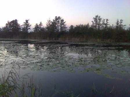 loosdrecht en omgeving fishing info europe foto impressie van loosdrecht en