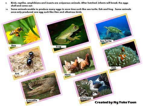 november birth animal 100 november birth animal tiger swimming ngsversion