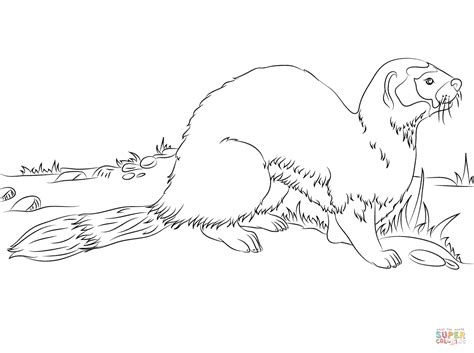 ferret printable coloring pages
