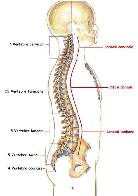 dolore coccige seduto impariamo insieme la colonna vertebrale