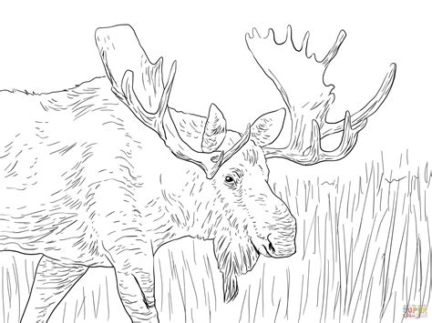 coloring book pages moose alaska moose coloring page free printable coloring pages