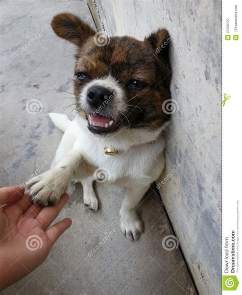 puppy abuse lend a paw stock photo image 42100122