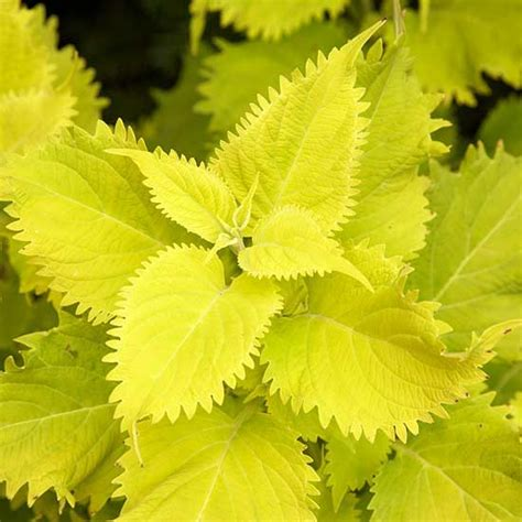 hot new plant varieties doug s favorites