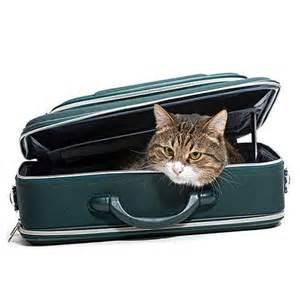 bagages en cabine