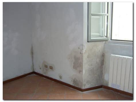 muffe sui muri interni comunicati sta