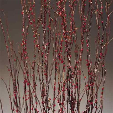 Birch Decorative Branches by Birch Branches Winterberry Decorative Branches
