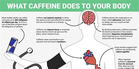 Does Caffeine Affect Detox by Caffeine Effects On Brain Www Pixshark Images