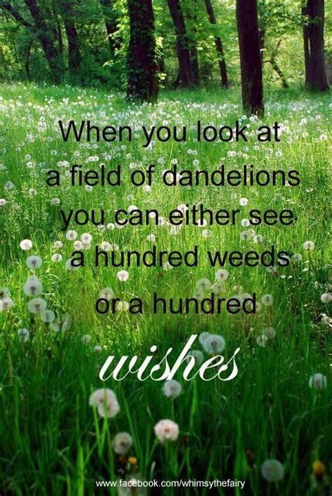 Dandelion Wishes dandelion wishes quotes