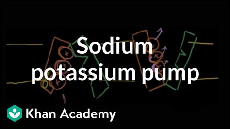 sodium potassium pump cells mcat khan academy youtube