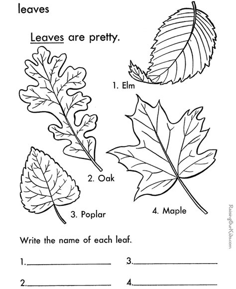 coloring pages of different leaves printable leaf coloring page handwriting activities and