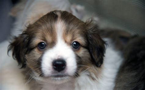 local pet stores that sell puppies sacramento might ban pet stores from selling dogs from