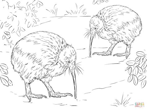 north island brown kiwi coloring page free printable