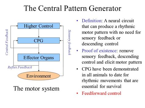 Central Pattern Generator Definition | bio inspired locomotion control of hexapods ppt video
