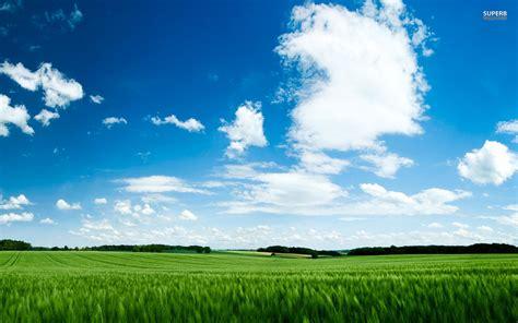 grass green wheat field sky wallpapers grass green