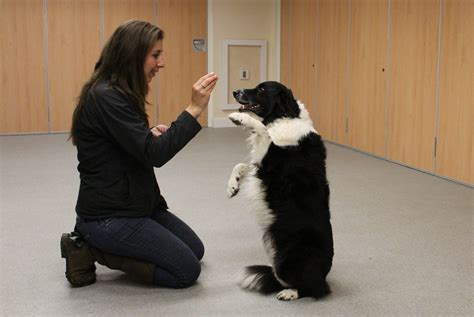 how to your to beg how to teach your beg dogs for
