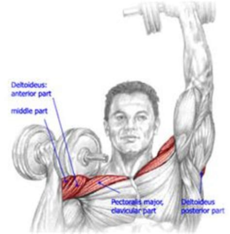 muscle groups used in bench press workout shoulders on pinterest lateral raises shoulder