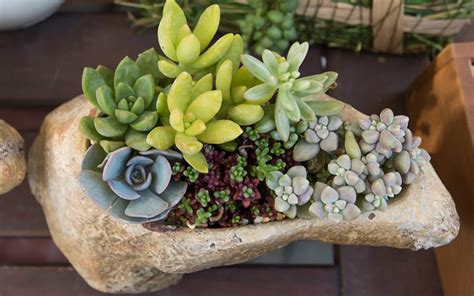 planter for succulents 15 unique and creative succulent planter ideas garden