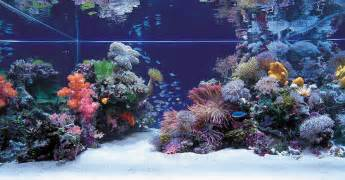 any salties out there saltwater aquascapes aquascaping