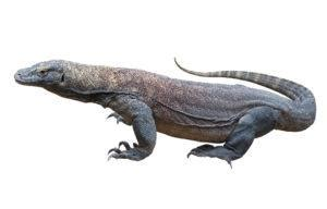 Kaos 3d Dinosaurus T Rex Hitam komodo 5 interesting facts plus facts bites