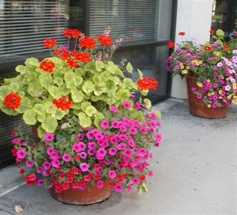 colorful outdoor potted plants container gardens