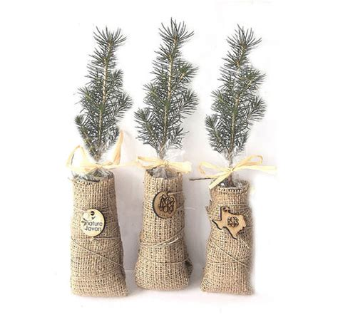 By Nature Launches Eco Wedding Gift List by Evergreen Tree Seedlings Green Wedding Favors